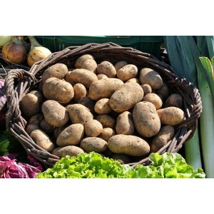 Malta nieuwe oogst lekker bij asperges