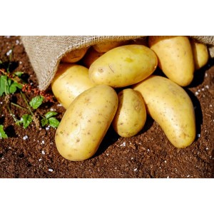 Nicola nieuwe oogst2,5 kilo